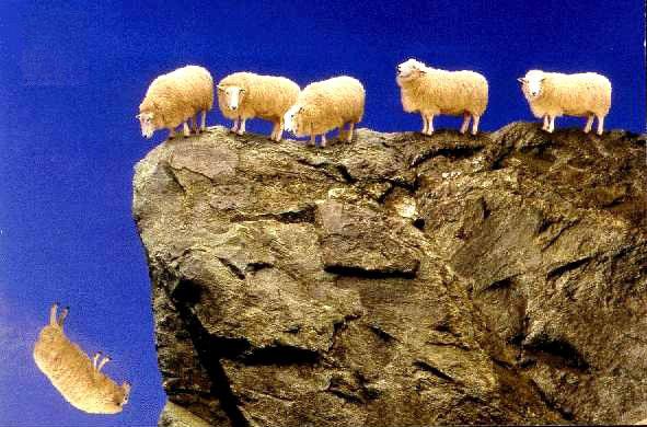 Sheep Make Terrible Shepherds!