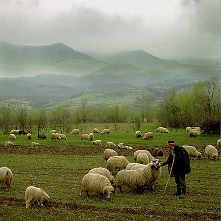 A Good Leader Needs a Great Shepherd!