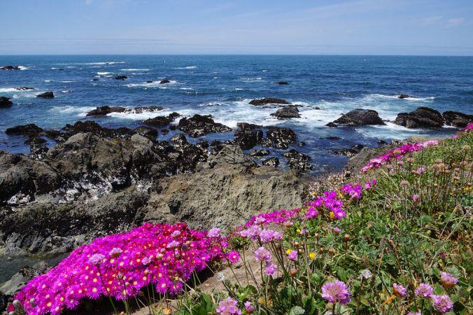 Mendocino_Coast_Botanical_Gardens4