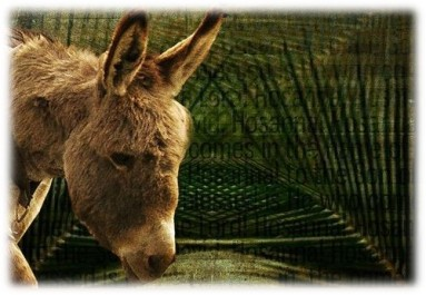 Donkey and Palm Branches