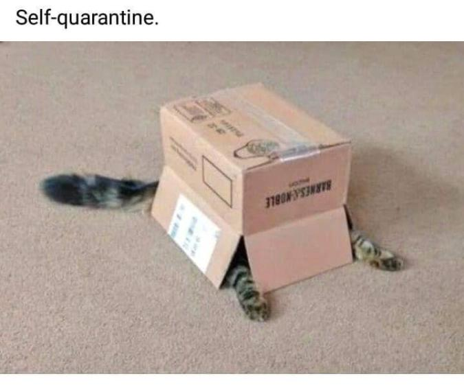 Self Quarantine Cat